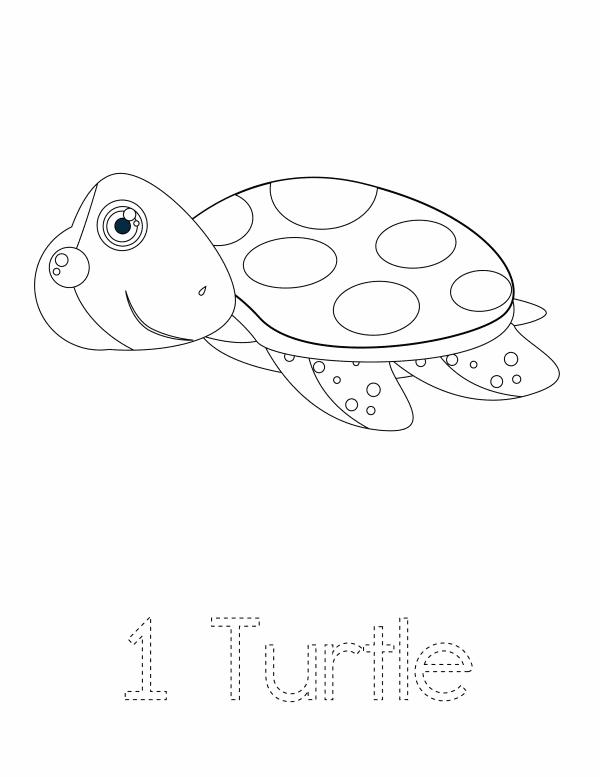 1 Turtle