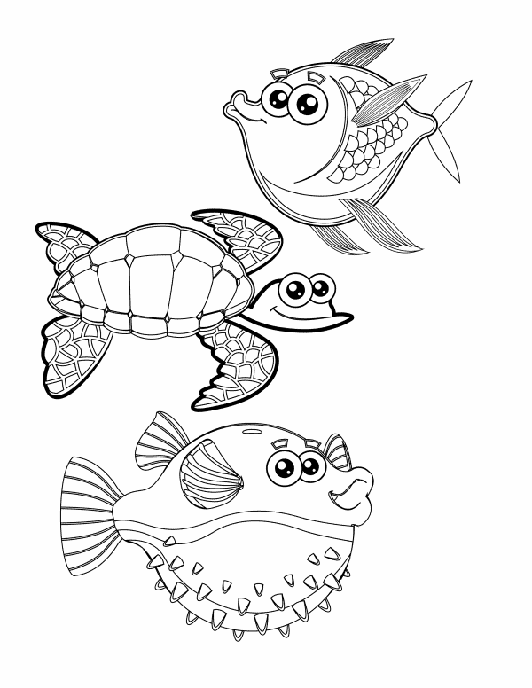 2 Fish 1 Turtle